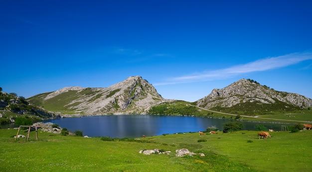 Picos de europa lago enol nelle asturie in spagna