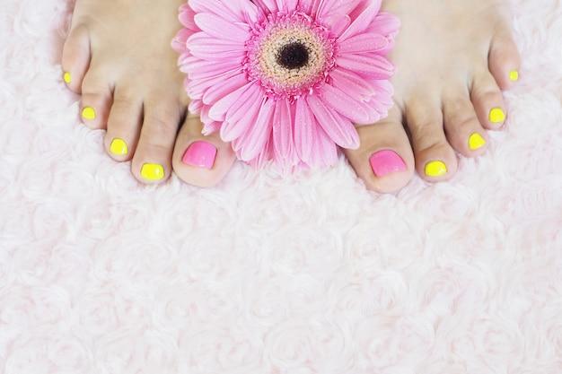 Piedi femminili con pedicure brillante su un tappeto di pelliccia rosa e gerbera rosa brillante con gocce.