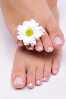 Piedi femminili di cura di bellezza con il fiore della camomilla
