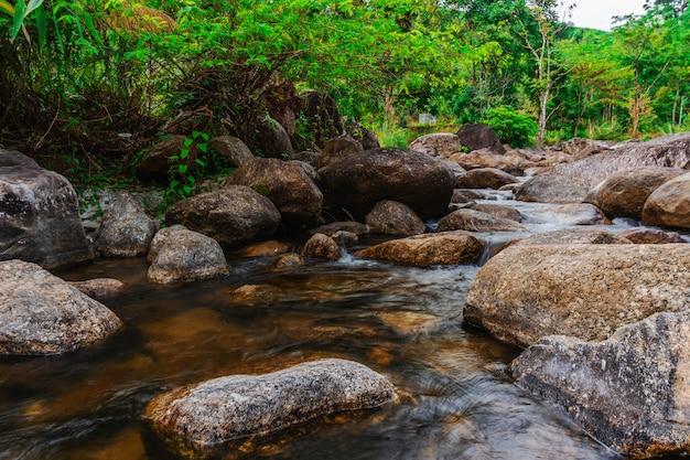 Pietra del fiume ed albero variopinti, albero di fiume dell'acqua di vista in foresta