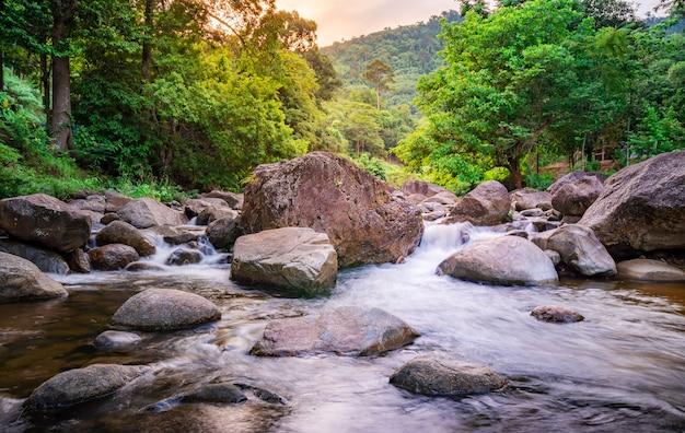 Pietra del fiume ed albero verde, foglia di pietra dell'albero verde del fiume in foresta
