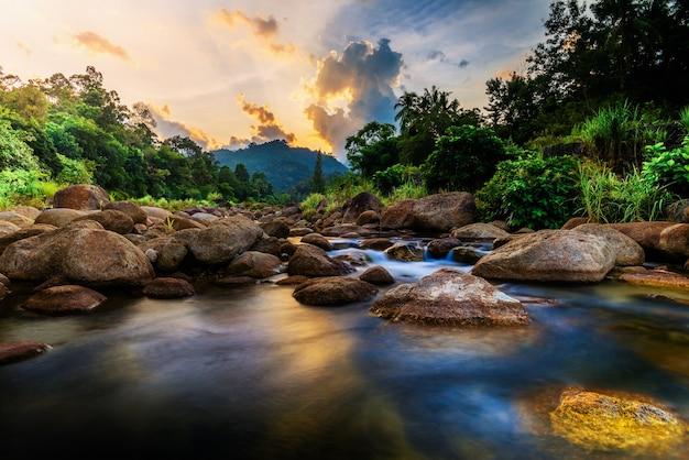 Pietra di fiume e albero con cielo e nuvola colorata, fiume di pietra e foglia di albero nella foresta