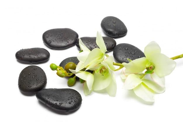 Pietre della stazione termale e fiori dell'orchidea, isolati su bianco.