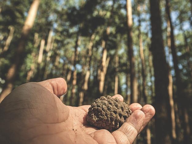 Pigna a disposizione con il fondo della natura, concetto di viaggio