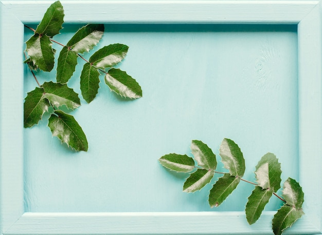 Pigne e foglie di mahonia su un legno blu