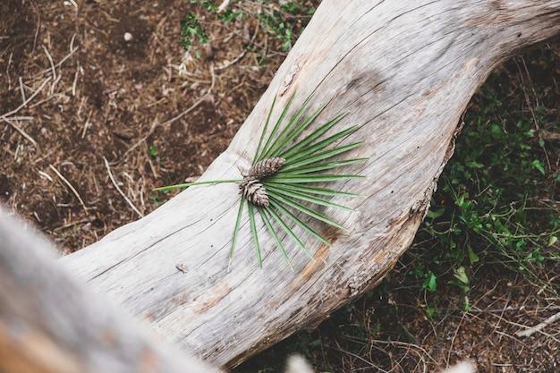 Pigne su un tronco, sfondo sfocato, con ambiente nebbioso