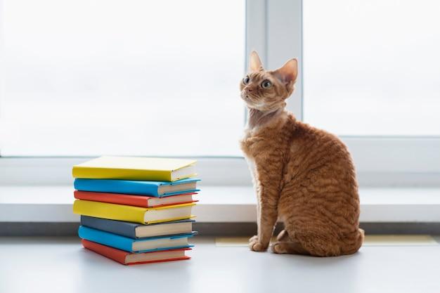Pila dell'angolo alto di libri accanto al gatto
