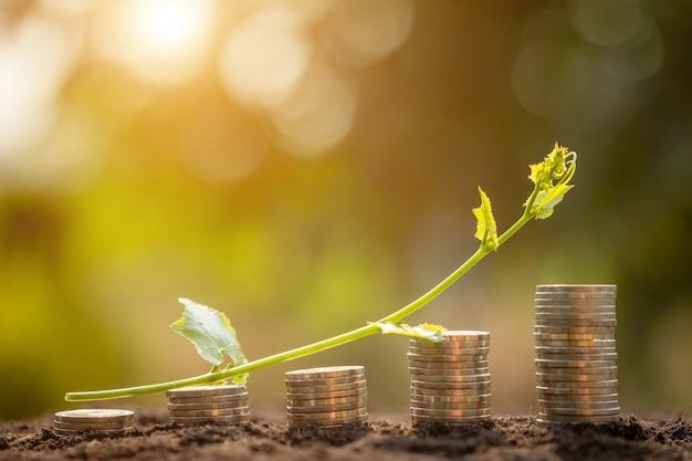 Pila della moneta con la giovane vite verde sulla cima. successo aziendale o concetto di crescita del denaro