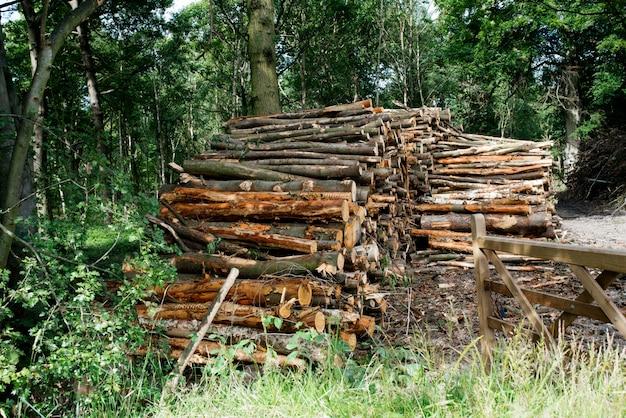 Pila di legno nella foresta
