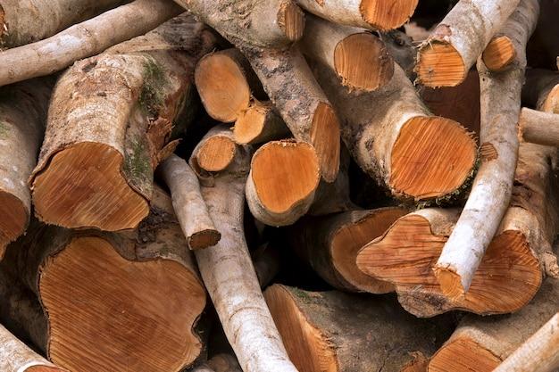Pila di tronchi di legno segato per servire da legna da ardere