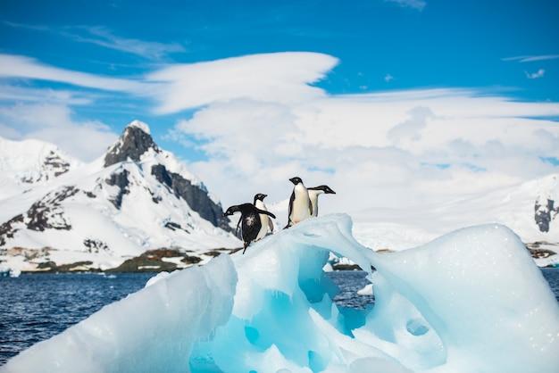 Pinguino adelie