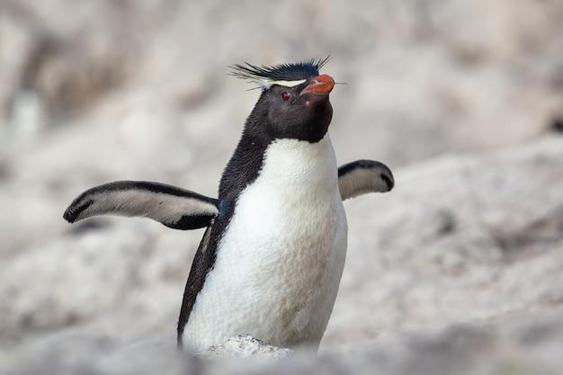Pinguino seduto sulla spiaggia rocciosa