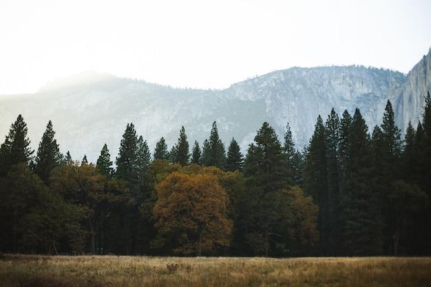 Pini in meadow view
