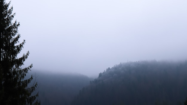 Pioggia autunnale e nebbia sulle colline di montagna. misty autunno foresta ricoperta di nuvole basse.
