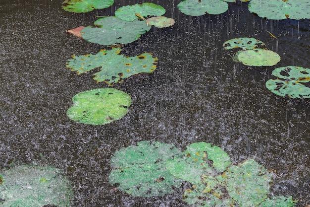 Pioggia caduta sul laghetto