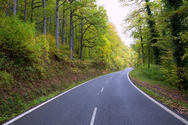 Pirenei curva strada nella foresta