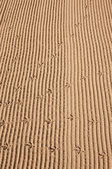 Piste dell'uccello nella sabbia sui precedenti della spiaggia