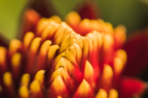 Pistilli di fiori freschi rossi