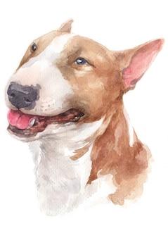 Pittura ad acquerello, cane marrone, faccia bianca, faccia buffa bull terrier
