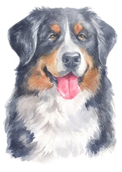 Pittura ad acquerello di bernese mountain dog
