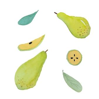 Pittura ad acquerello di frutta pera