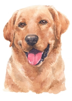 Pittura ad acquerello di labrador retriever