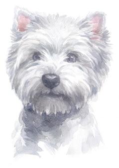 Pittura ad acquerello di west highland white terrier