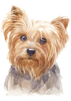 Pittura ad acquerello di yorkshire terrier