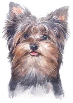 Pittura ad acquerello di yorkshire terrier