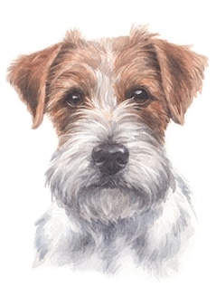 Pittura color acqua di jack russell terrier
