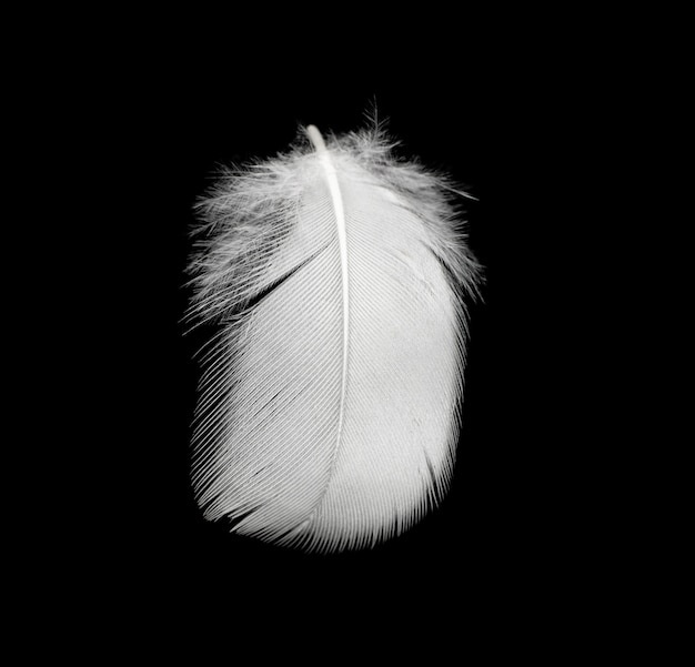Piuma bianca su sfondo nero
