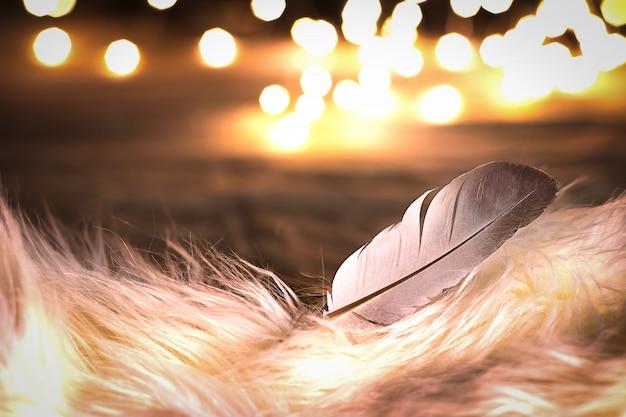 Piuma di uccello bianca naturale su pelliccia bianca con il fondo della luce del bokeh