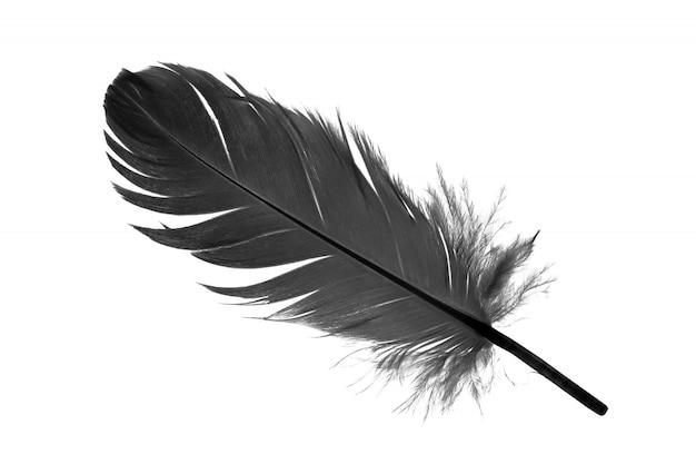 Piuma nera su sfondo bianco