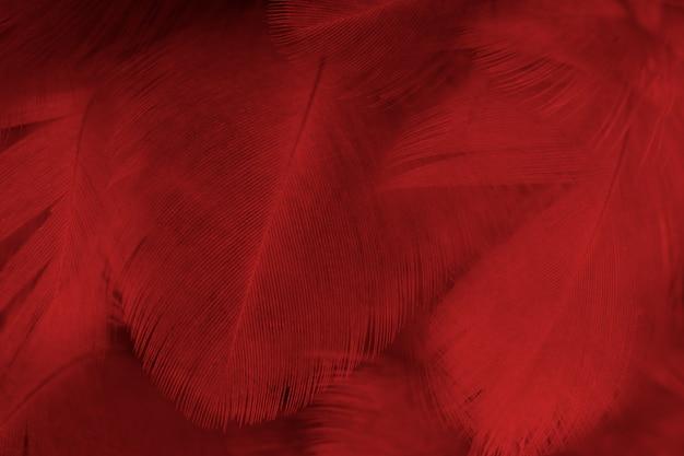 Piuma pattern texture di sfondo