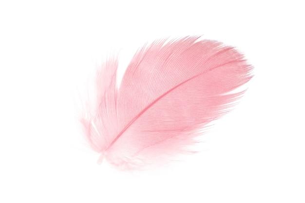 Piuma rosa corallo su sfondo bianco