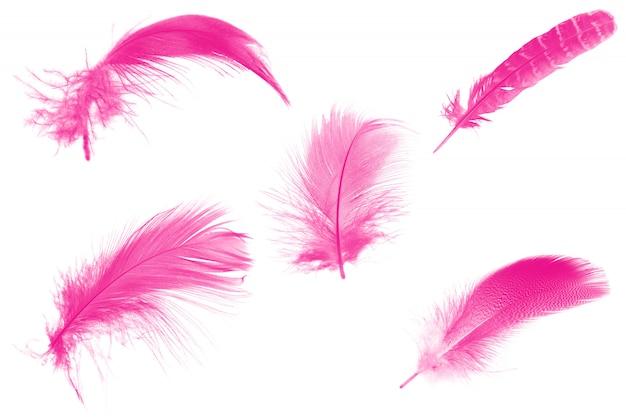Piuma rosa su bianco