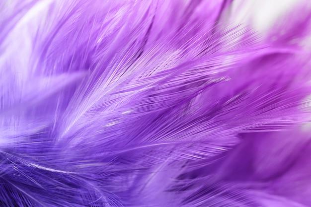 Piume di pollo viola in stile morbido e sfocato per lo sfondo