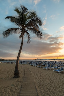 Plancia a piedi tra la palma e lettini a puerto rico beach a gran canaria, spagna.