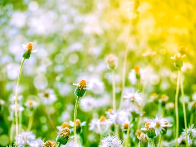 Poca neve del fiore dell'erba che cade in primavera