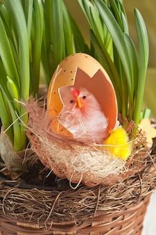 Pollo con guscio d'uovo nel nido