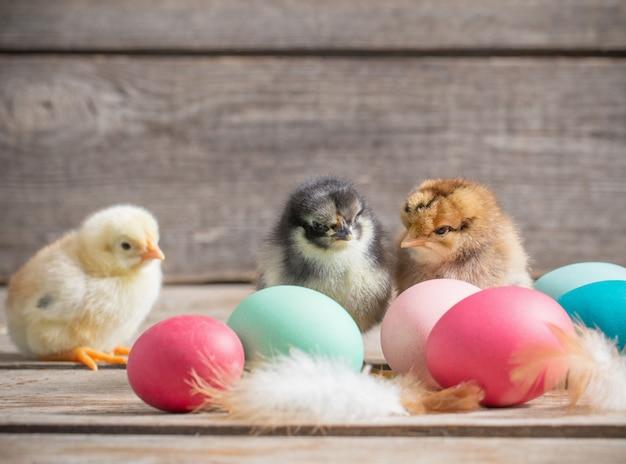 Pollo con le uova di pasqua su spazio di legno