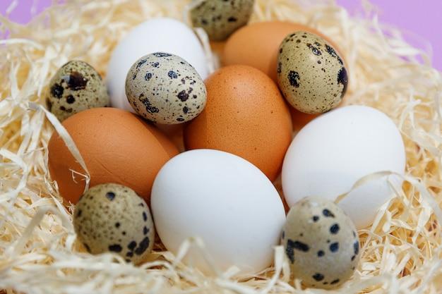 Pollo e uova di quaglia nel nido di paglia