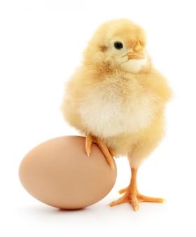 Pollo e uova