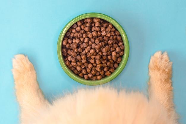 Pomeranian spitz sta mangiando. pet cibo secco in una ciotola di ceramica verde su sfondo chiaro blu pastello con zampe di cane, gambe soffici. cibo per cani, cuccioli o gatti. vista dall'alto, piatto. nutrizione sana per animali domestici.