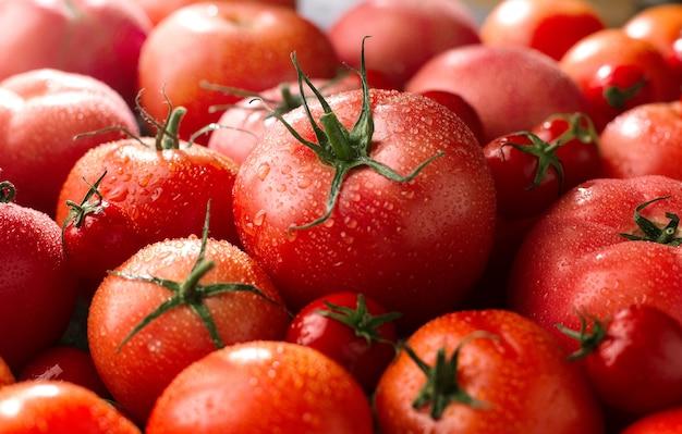 Pomodori rossi freschi sotto il sole, nuovo raccolto di verdure