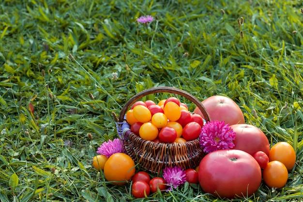 Pomodori variopinti, merce nel carrello dei pomodori ciliegia su erba. posto per il testo.