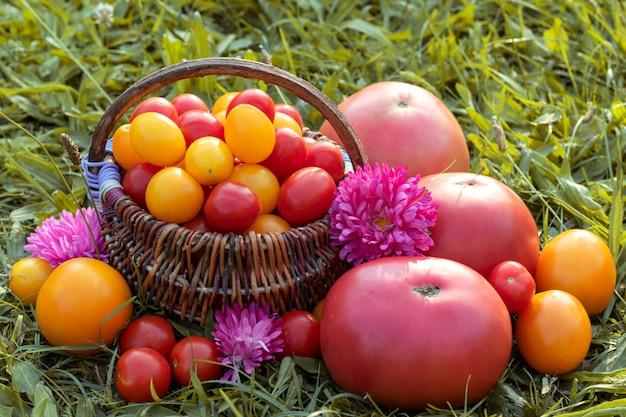 Pomodori variopinti, merce nel carrello dei pomodori ciliegia su erba.