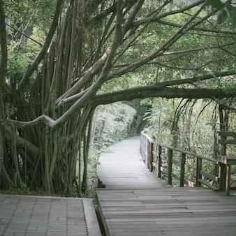 Ponte di legno tra alberi