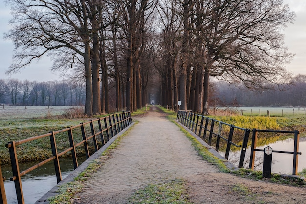 Ponte e cuscinetto di legno alla foresta nei paesi bassi, con un fiume calmo