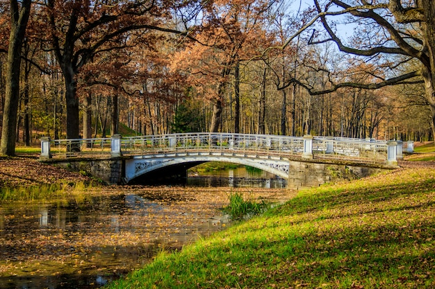 Ponti parco autunnale della città. autunno dorato autunno nel parco fogliame giallo